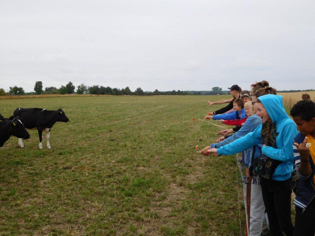 Kühe in freier Wildbahn